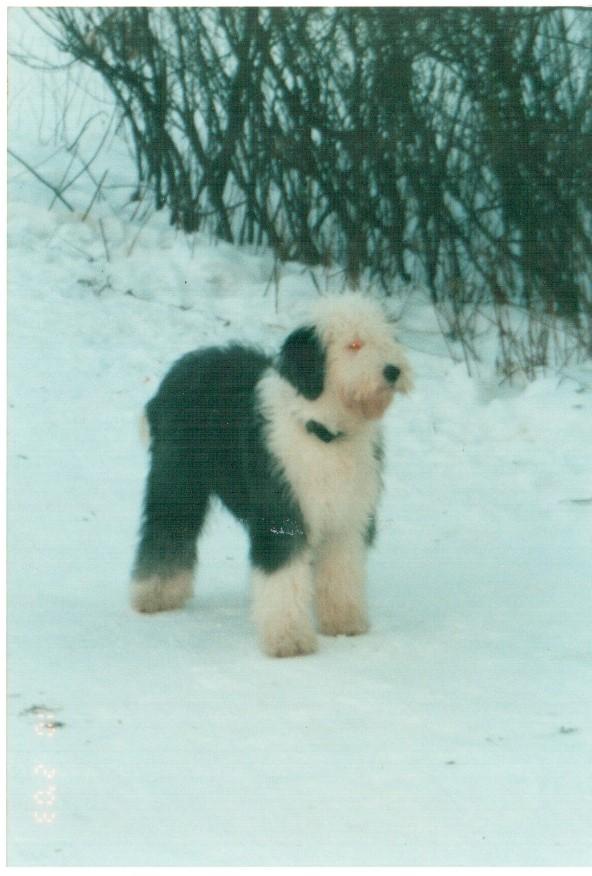 Новые фотографии А-помета 2002 года рождения.