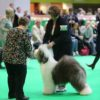 12 month, Crufts 2018