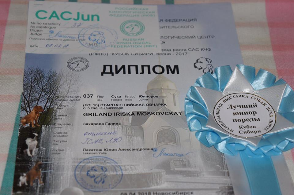 Выставка ранга САС в Новосибирске.
