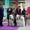 Kennel Griland best kennel in breed!