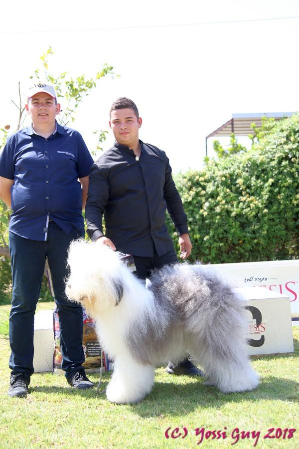 Dog show in Israil