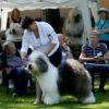 Misha aka Griland Throughout the World JUNIOR BEST IN SHOW.