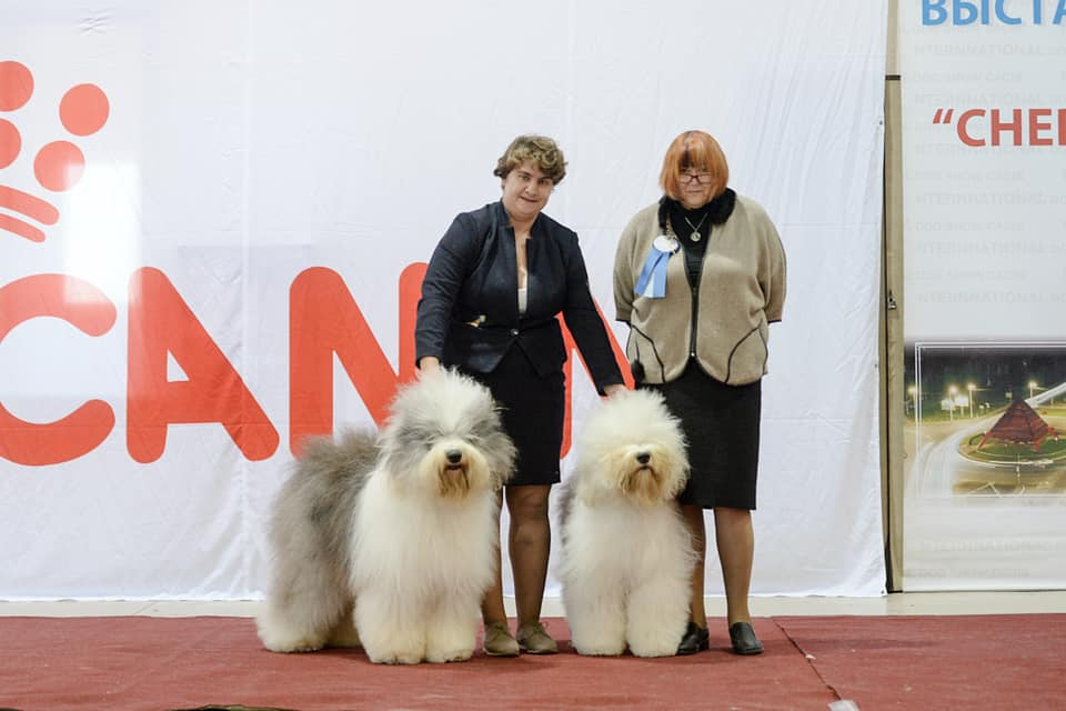 CACIB dog show in Voronezh , Russian 07/10/2018