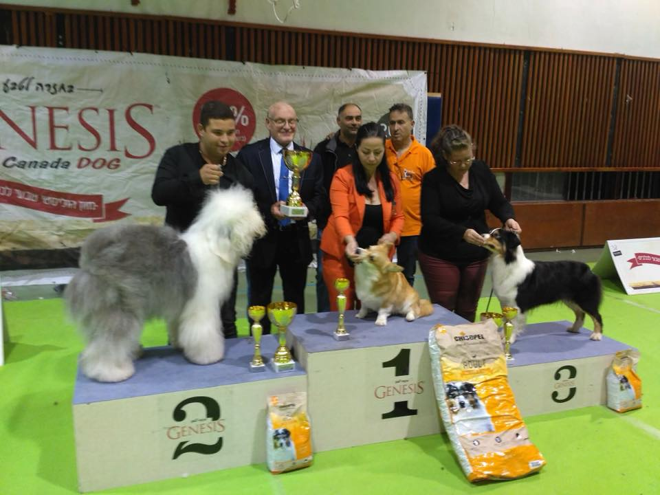 Special Sheepdog Club Show in Israel, 17/11/2018