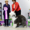 Eja - 3 BEST IN SHOW JUNIOR