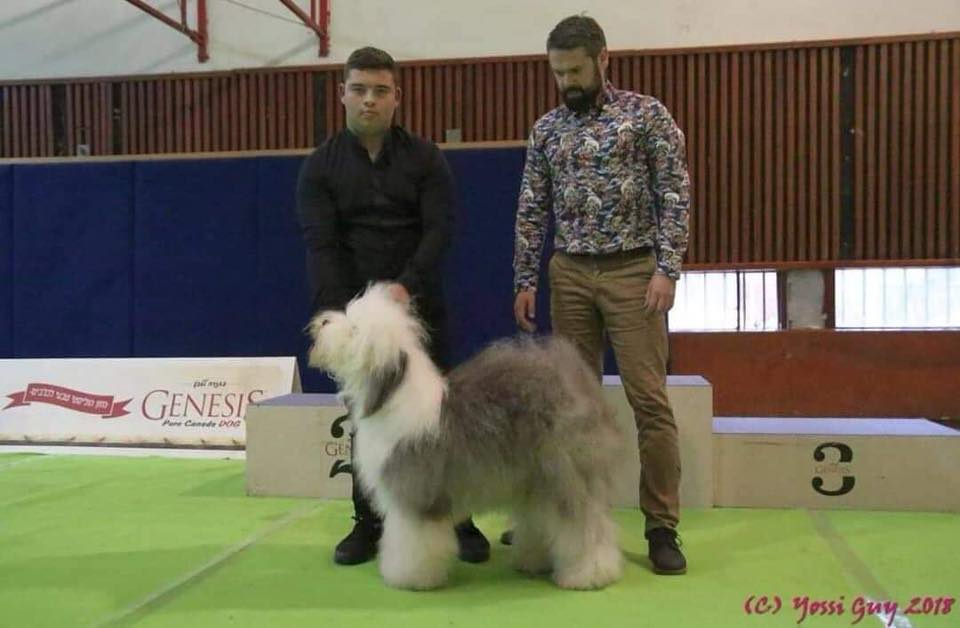 Dog show in Israel, 16/12/2018