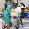 Квиша (Griland The Magic Queen ) -  CAC, BOB, BEST IN GROUP, 3-BEST IN SHOW !!!