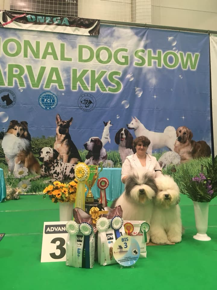 CACIB dog show in Narva, Estonia 2019
