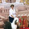 Пуфа(Griland Masterpiece ) => Лучший Ветеран, ЛПП, БЕСТ ИН ШОУ ВЕТЕРАНОВ, БЕСТ ИН ГРУПП !!! Пуфа(Griland Masterpiece ) => Лучший Ветеран, БЕСТ ИН ШОУ ВЕТЕРАНОВ!!!