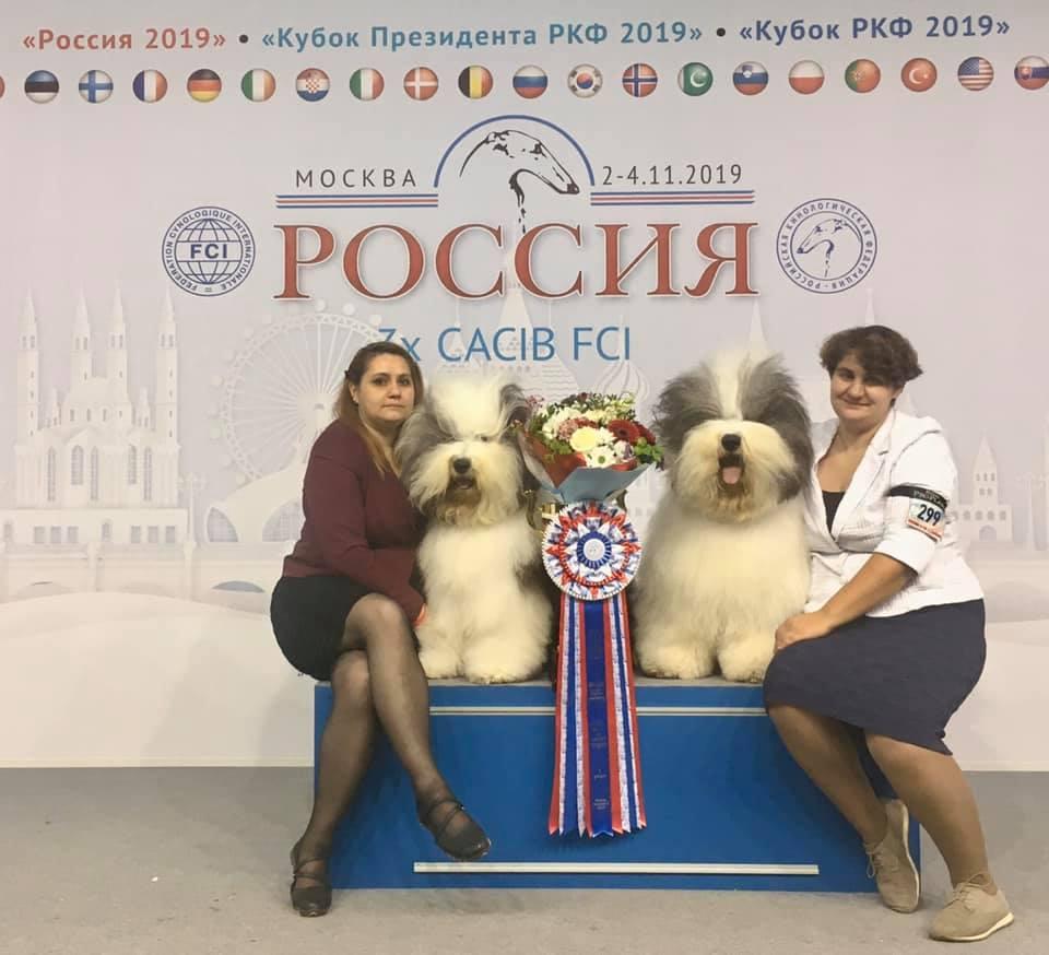 3 Международные выставки ранга CACIB в Москве, Россия, 02-04/11/2019