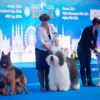 Misha ( Griland Throughout the World ) - CAC, CACIB, BOB, Победитель России, BEST IN GROUP .