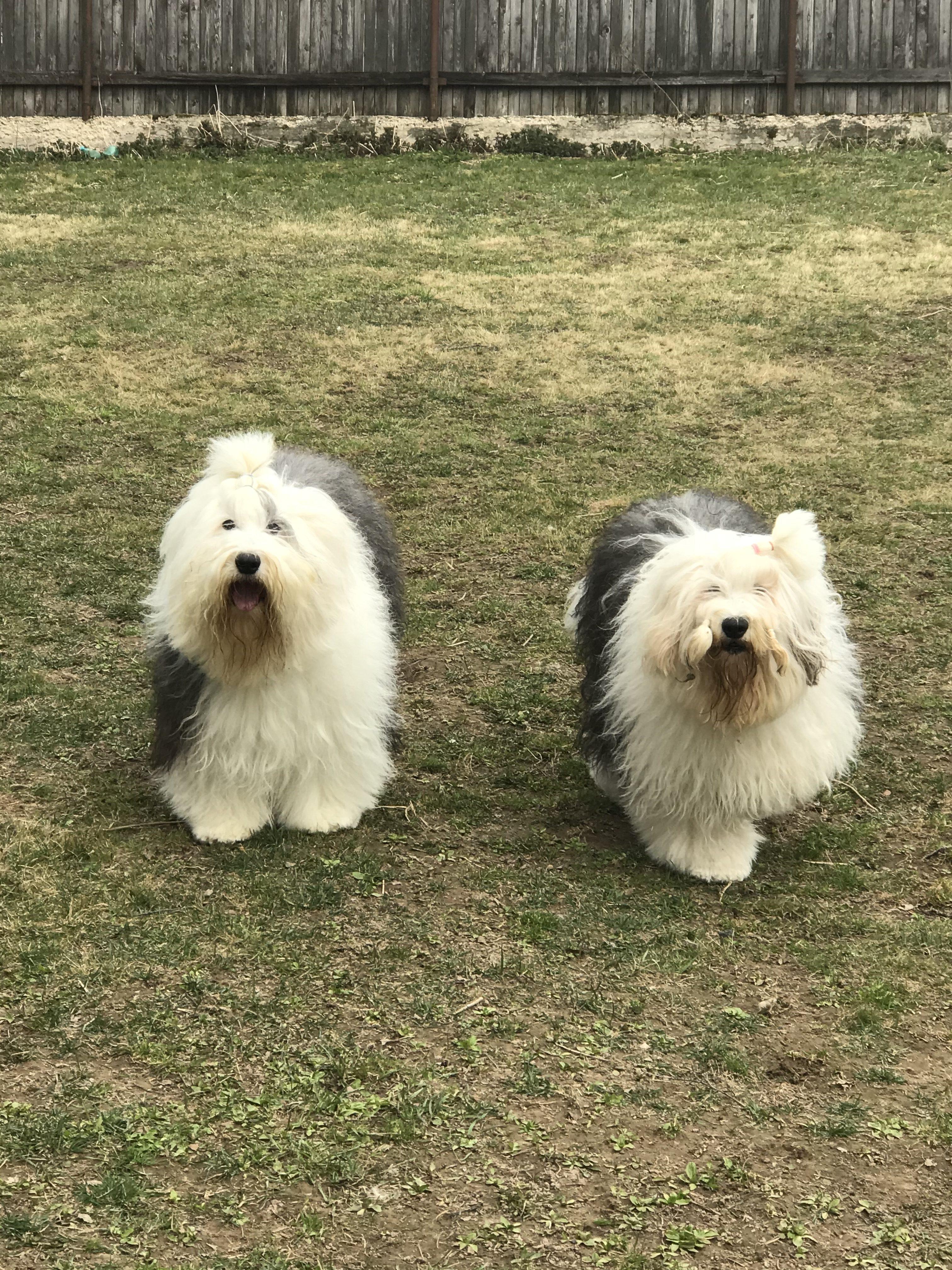 Две сестрички Квини и Клава .