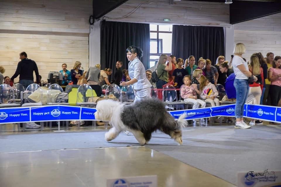Победа Арвен на CACIB в Иркутске.
